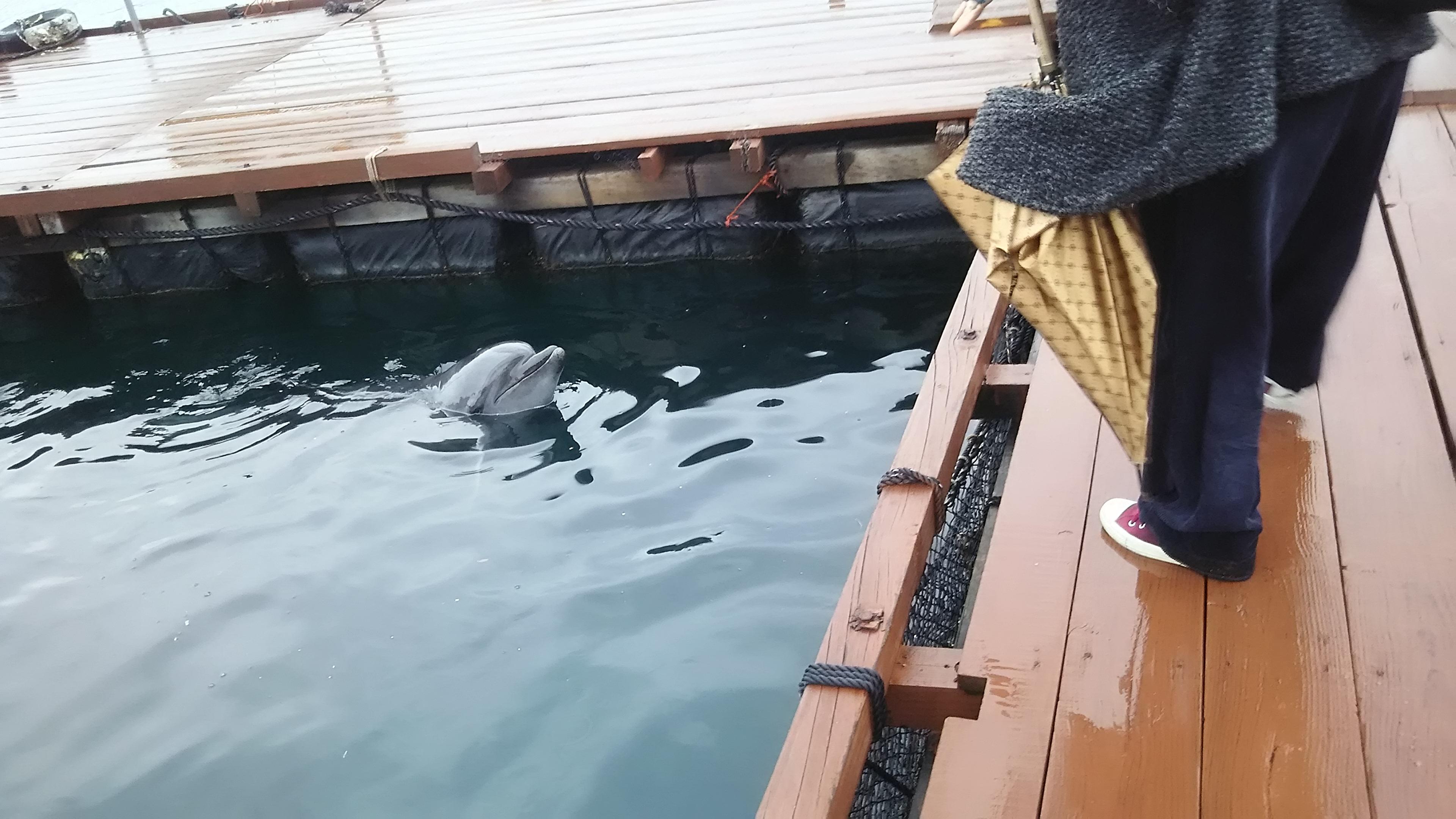イルカの泳ぐ姿