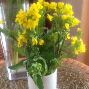 菜の花のブーケ